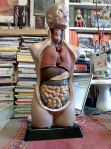 La disposizione dei miei organi interni